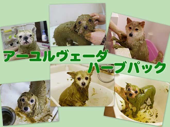 【エステ気分♪】お悩みによって選べるハーブパック!乾燥する冬におすすめ!