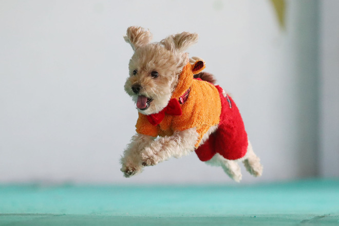 11月12日開催【飛行犬カレンダー&写真集】が届きました!