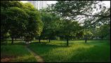 隣の公園01