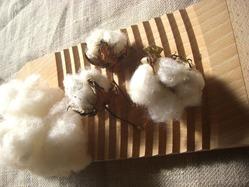 10綿の実