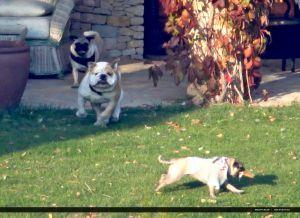 アンジー・ブラピ家族♪Dog