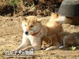 取り残されたマリと子犬