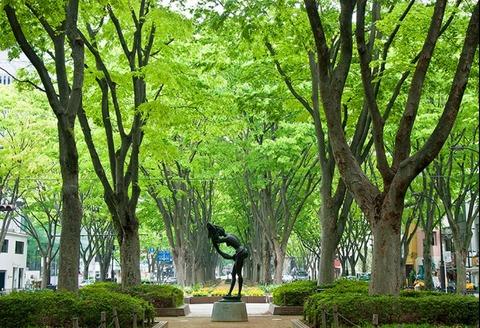 仙台 定禅寺通り ケヤキ