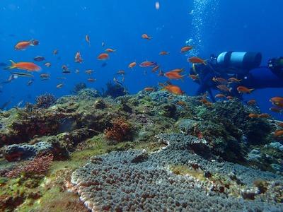 大久保浜サンゴ