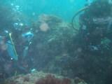 田子の海 2