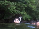 水面に上がってみました