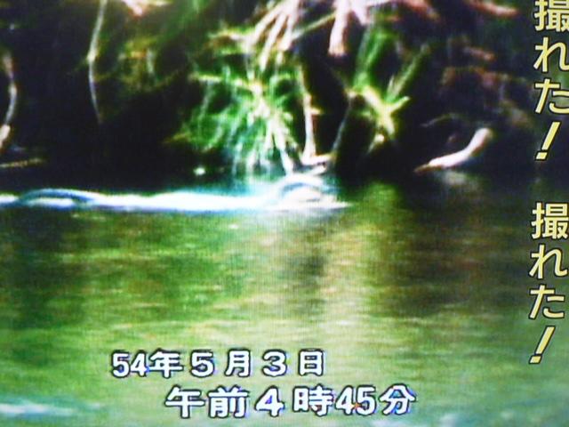 ニホンカワウソの画像 p1_31