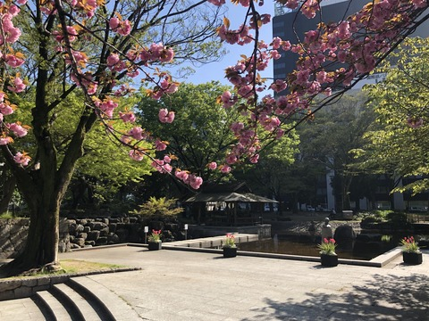 Welcome Beautiful Japan double cherry blossoms 2019041804