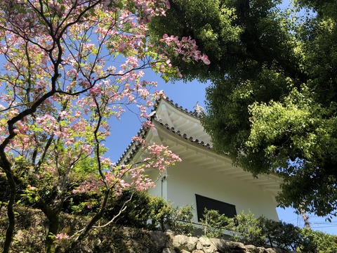 Welcome_Beautiful_Japan_Inuyama_Castle_2019050202