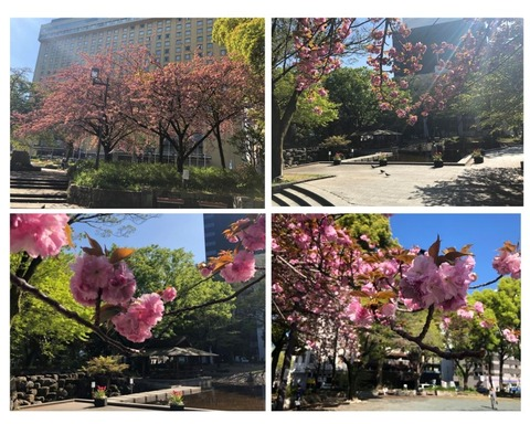 Welcome Beautiful Japan double cherry blossoms 2019041800