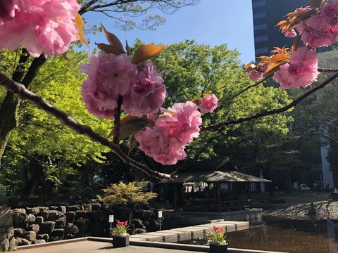 Welcome Beautiful Japan double cherry blossoms 2019041809