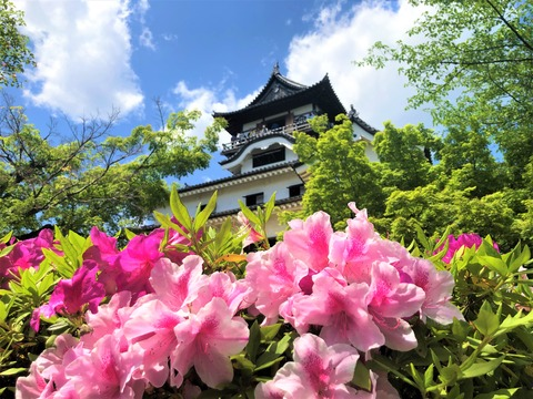 Welcome_Beautiful_Japan_Inuyama_Castle_2019050216