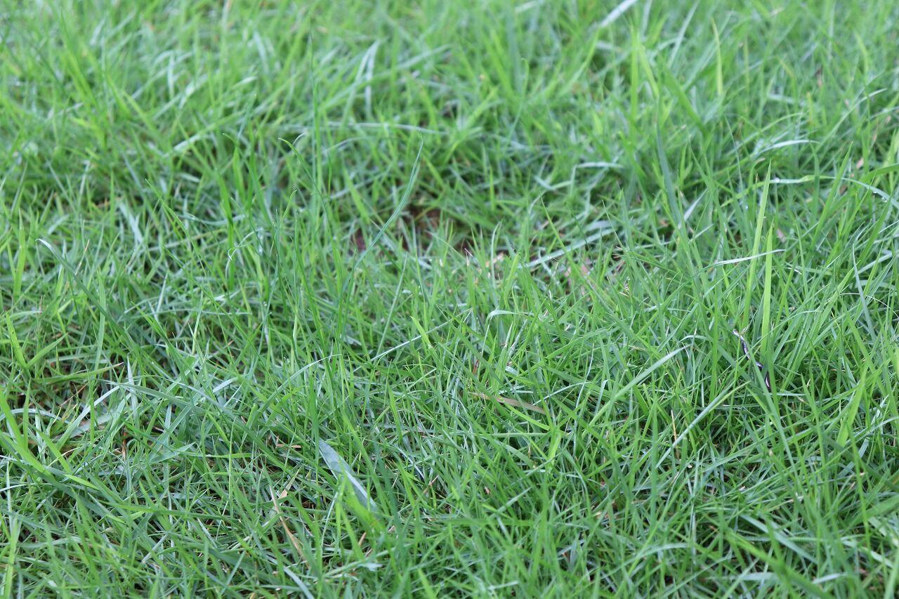 は 芝生 隣 青い の