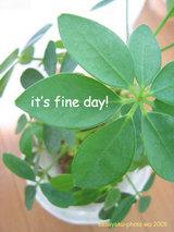 it's-fine-day!