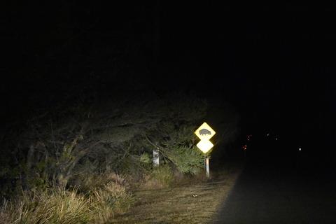 「ウォンバット注意」の道路標識