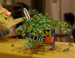 空き缶の鉢植え