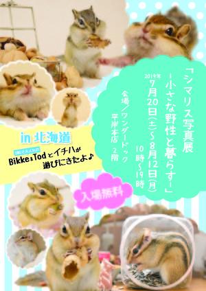 WD_Shima_Risu_Omo_A4_0709