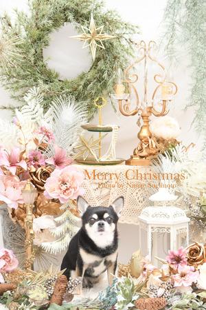 DSC_57832020クリスマス