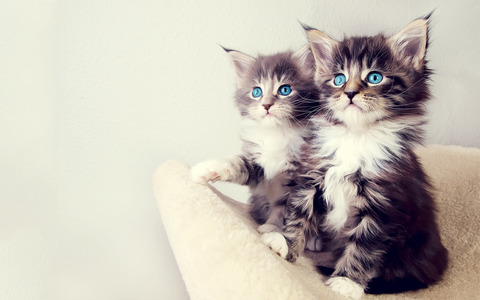双子ペット