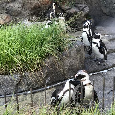 池袋サンシャイン水族館ペンギン