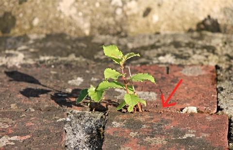 plant-2568242_1920 (2)