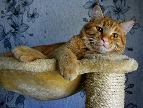 cat-968203_1920