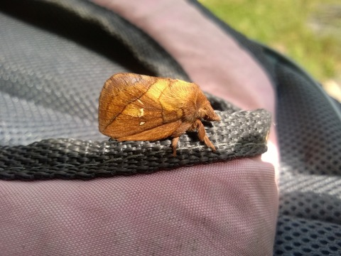 moth-1572532_1920