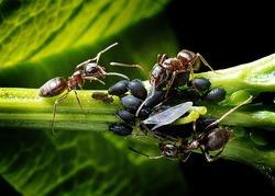 ants-1271768_1920