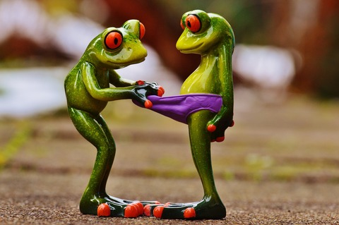 frogs-1158958_1920
