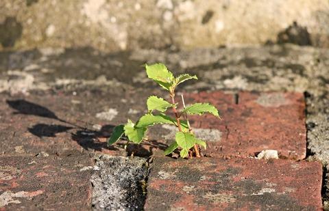 plant-2568242_1920