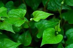 leaf-854515_1920