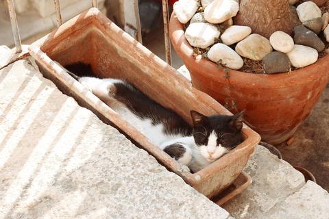 cat-1248546_1920