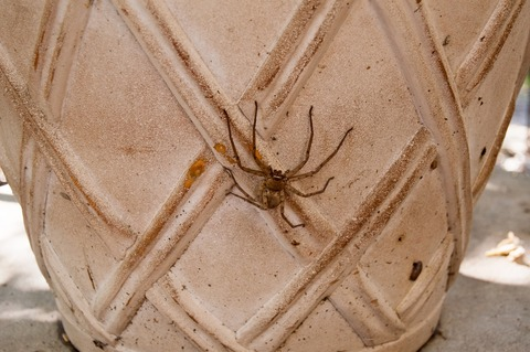 huntsman-spider-2861182_1920