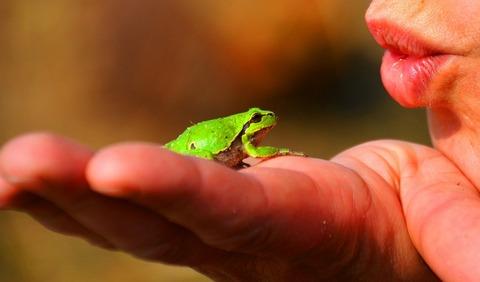 frog-prince-334970_1920