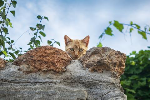 cat-3747318_1920