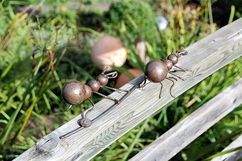ants-2759483_1920
