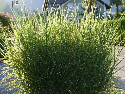 grass-949737_1920