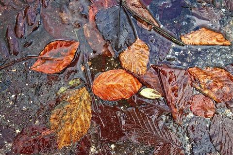 leaf-3093453_1920