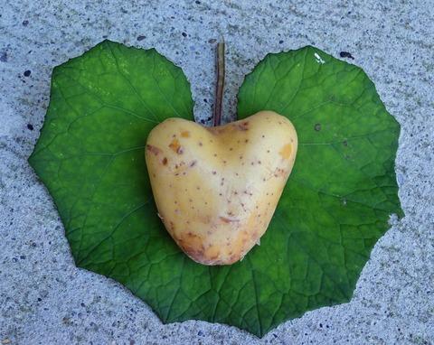 heart-1625832_1920