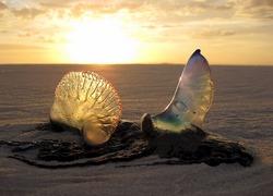 jellyfish-1969693_1280