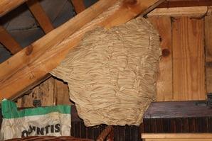hornets-1169362_1920