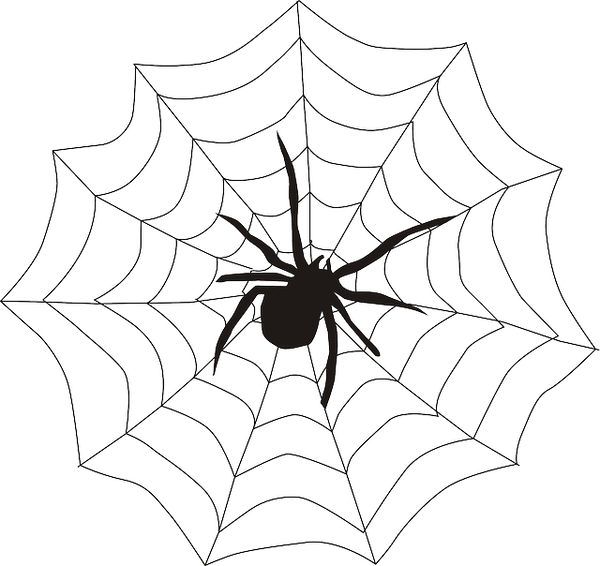 spider-155449_640