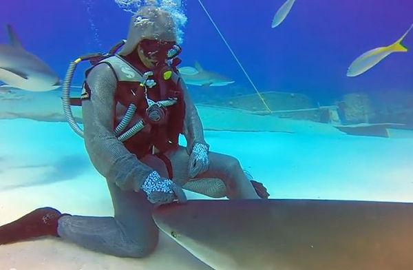 【生物】サメに催眠をかける達人