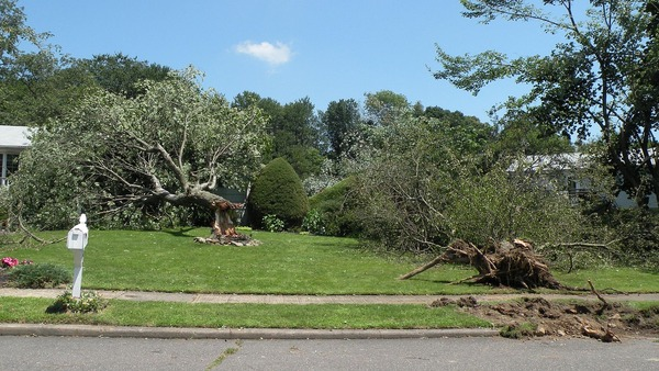 Milford,_CT_2009-07-31_wind_damage_4