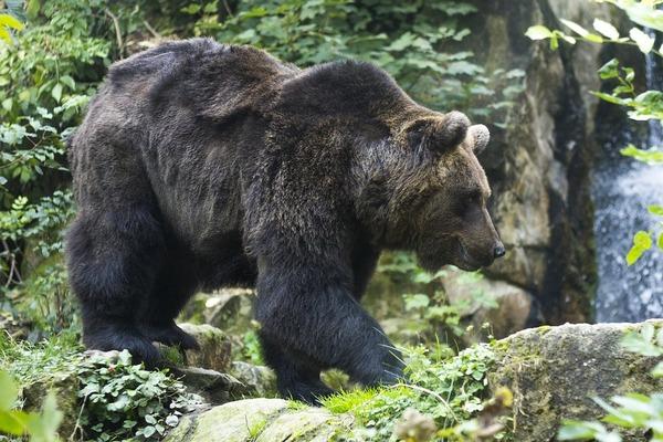 bear-1388621_960_720