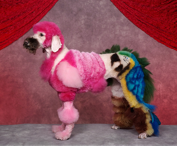crazy-dog-grooming15