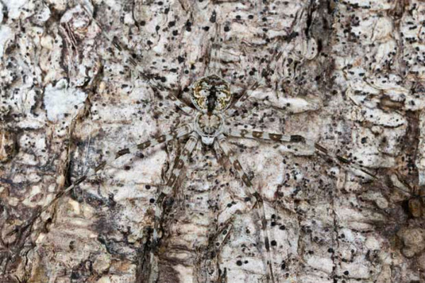 camouflaged-animals-26
