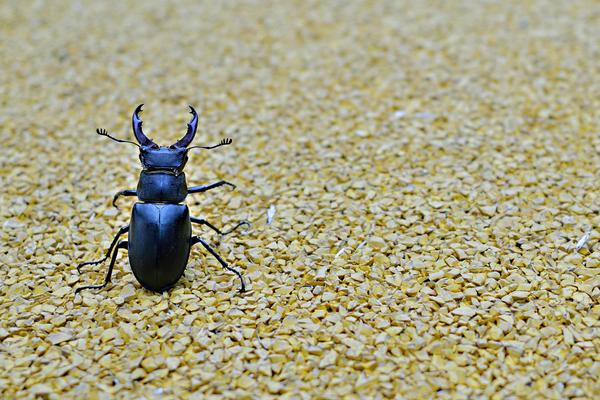 【虫注意】虫の画像挙げて名前当てられたら死亡