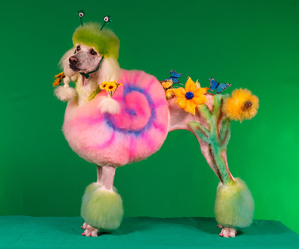 crazy-dog-grooming10