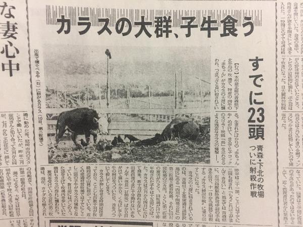 毎日新聞「牛がカラスに食われる」